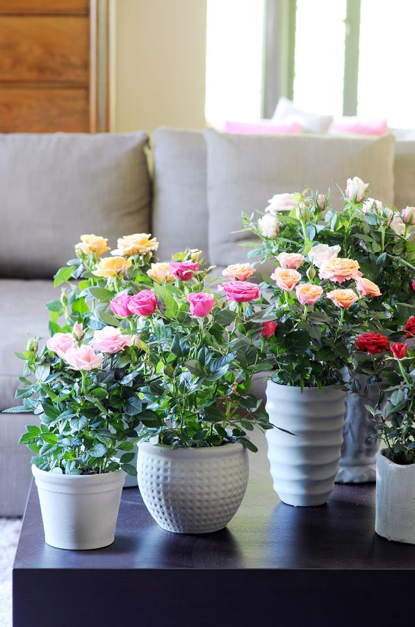 C mo cuidar tus plantas de interior ideas jardineros for Plantas en macetas