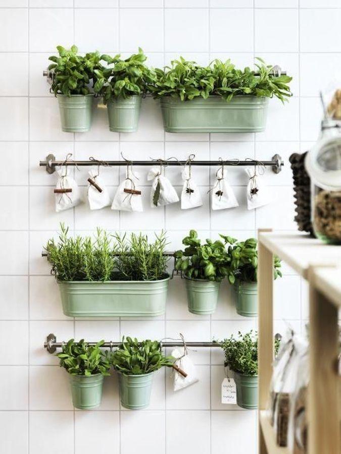 Maceteros y plantas aromáticas