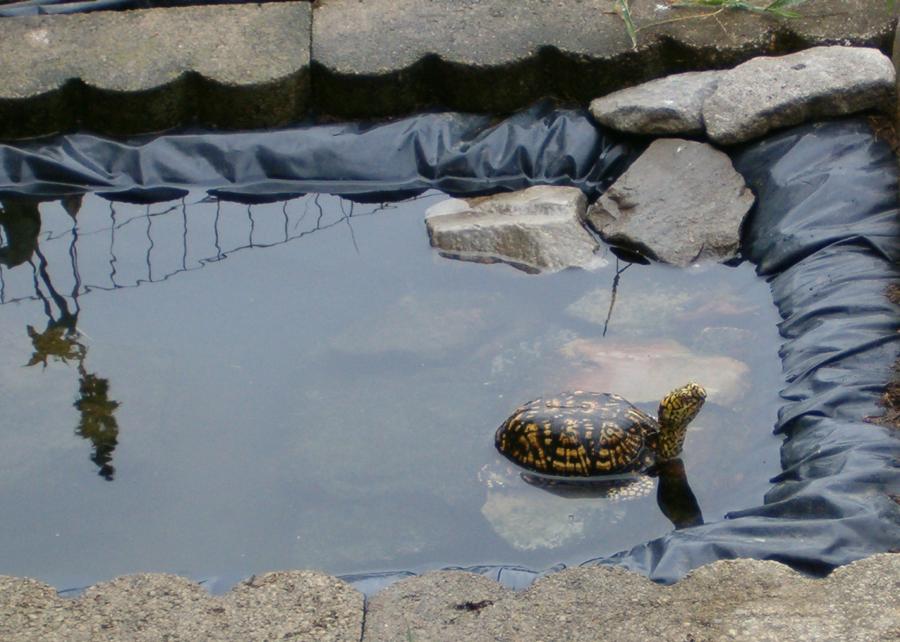 c mo mantener limpio un estanque en el jard n ideas limpieza On como mantener limpio un estanque