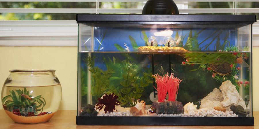 mantenimiento acuario