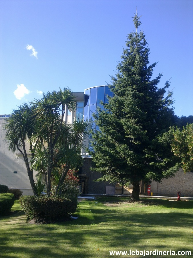 Mantenimiento de jardín en edificio de oficinas
