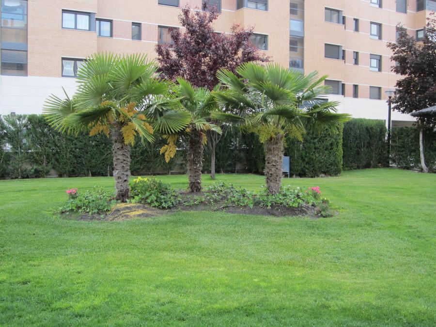Mantenimiento integral de edificios y jardines