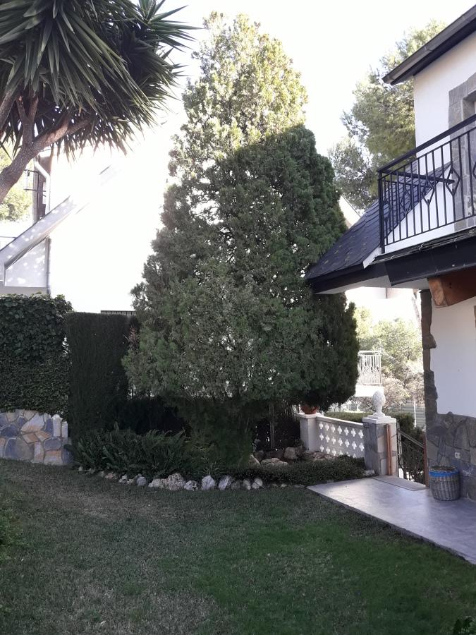 Mantenimiento Jardín ( Abeto )
