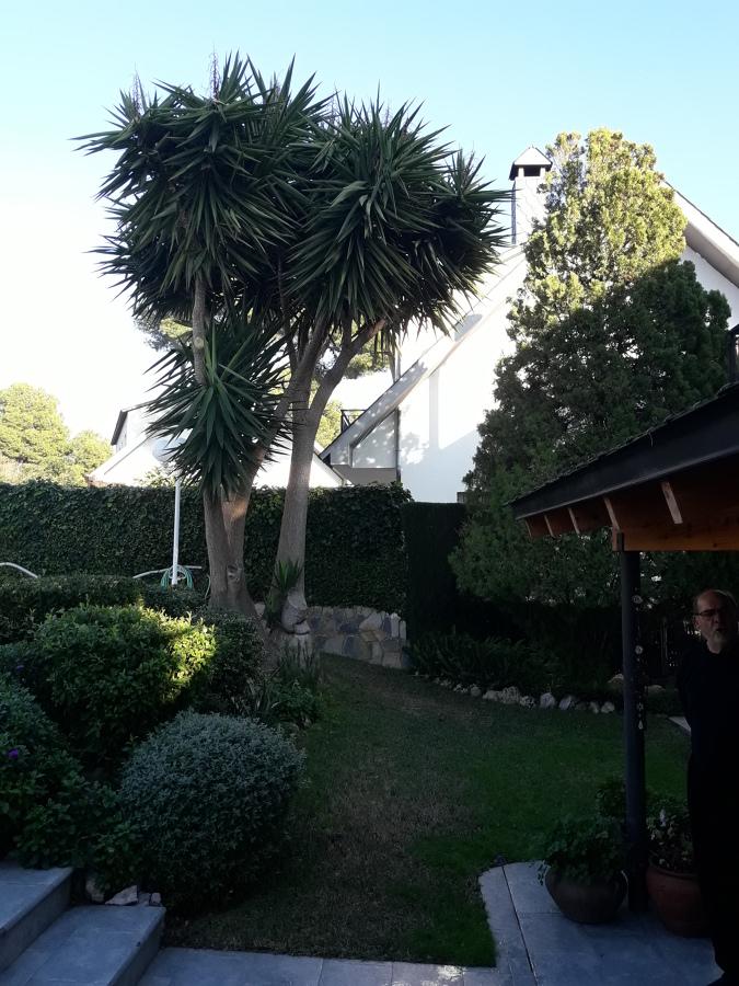 Mantenimiento Jardín ( Palmeras )