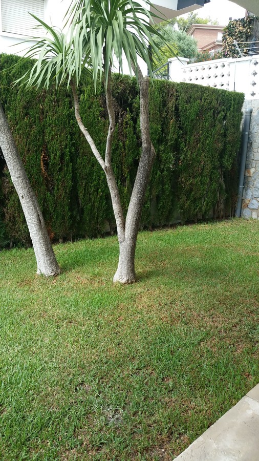Mantenimiento Jardin , poda de setos y saneamiento de palmeras