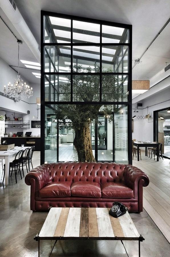 olivo en salón