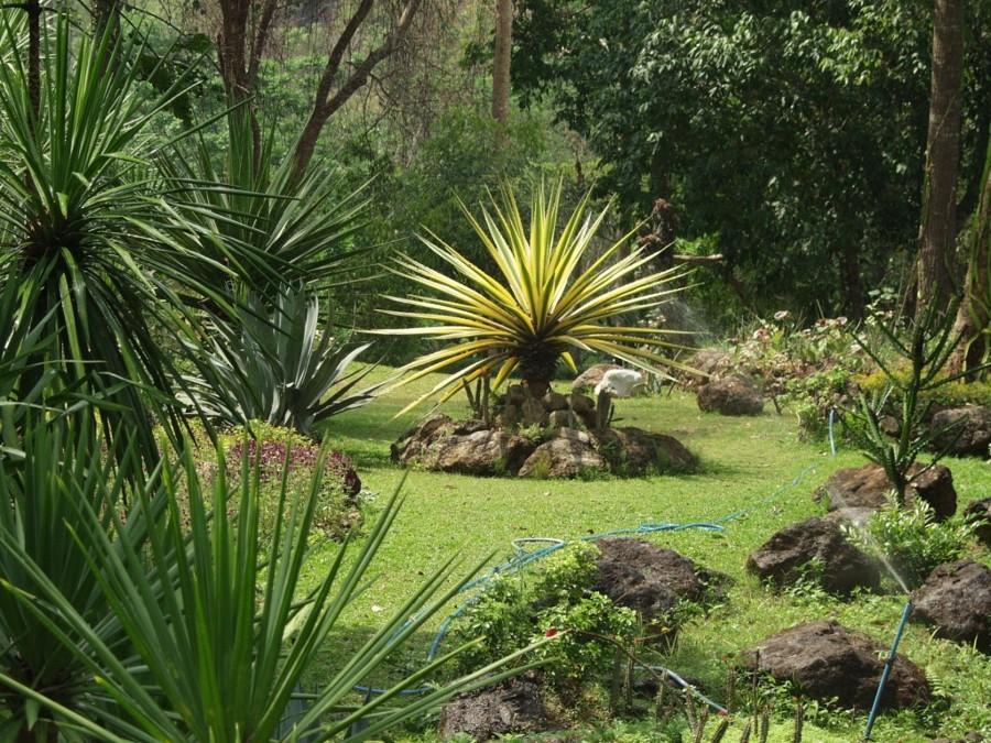 Organizar el jard n con rboles y arbustos ideas jardineros for Arboles para jardines pequenos