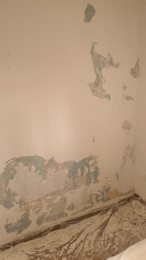 pared antes