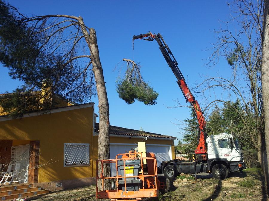 Pasando los troncos por encima de la casa