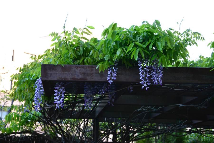 pérgola plantas