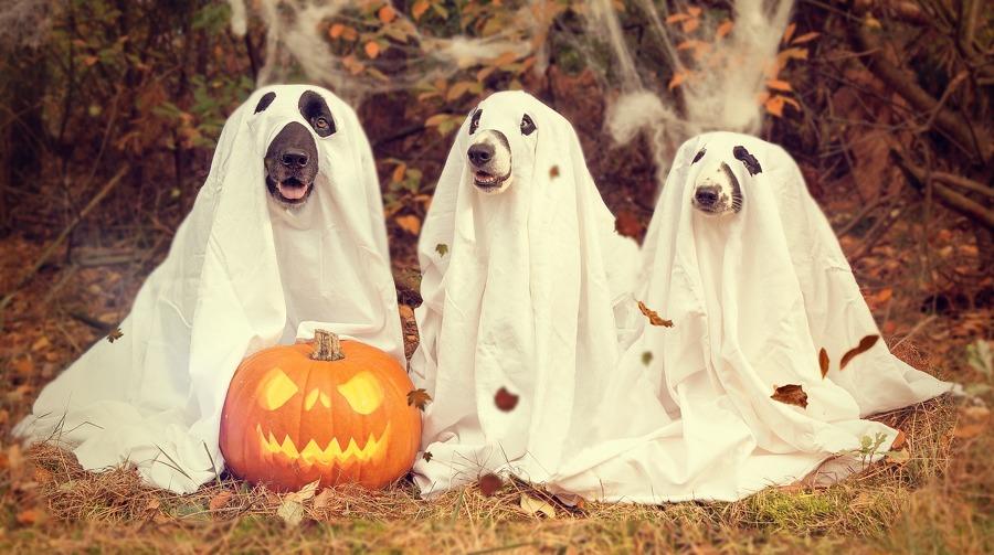 Perros vestidos de fantasmas