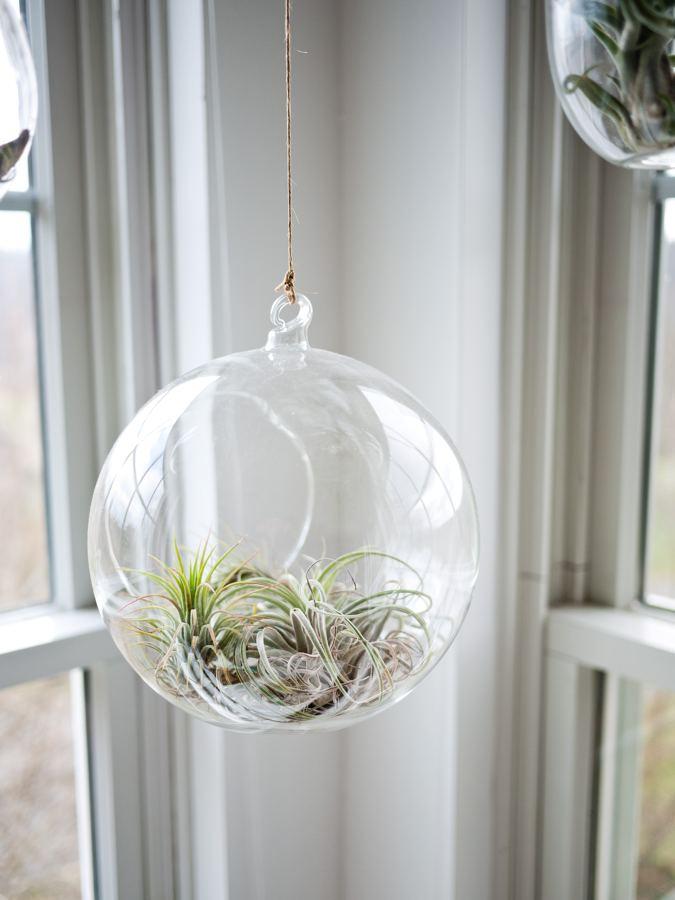 Planta en maceta transparente colgante (jardín vertical)