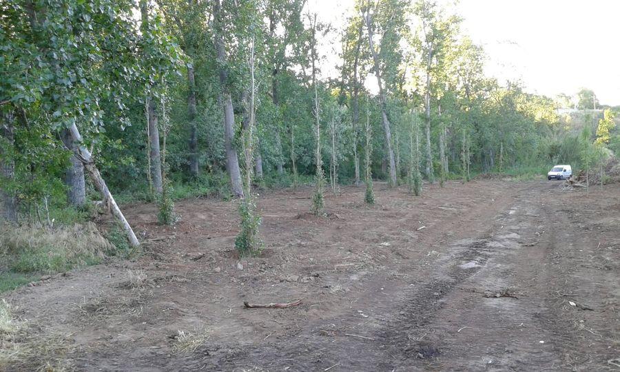 Plantación i repoblación de árboles de ribera