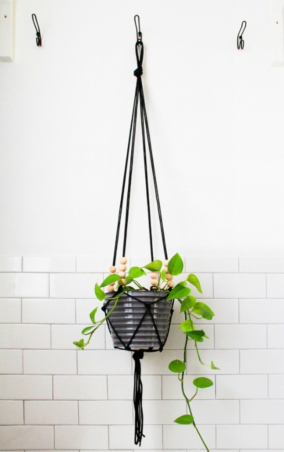 Foto: Plantas Colgadas Cuerda de Miv Interiores #903887 - Habitissimo