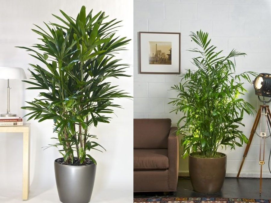 5 plantas de interior que no podr s matar ideas jardineros for Plantes d interieures