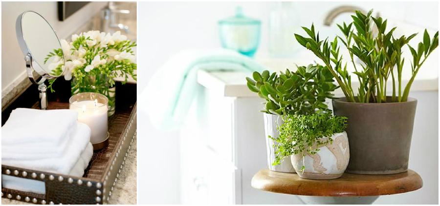 plantas para baños