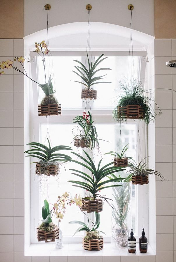 plantas para el bao