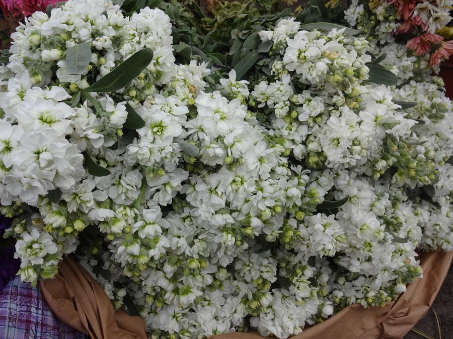 Plantas arom ticas que perfumar n tu jard n todo el a o - Jardin de aromaticas ...