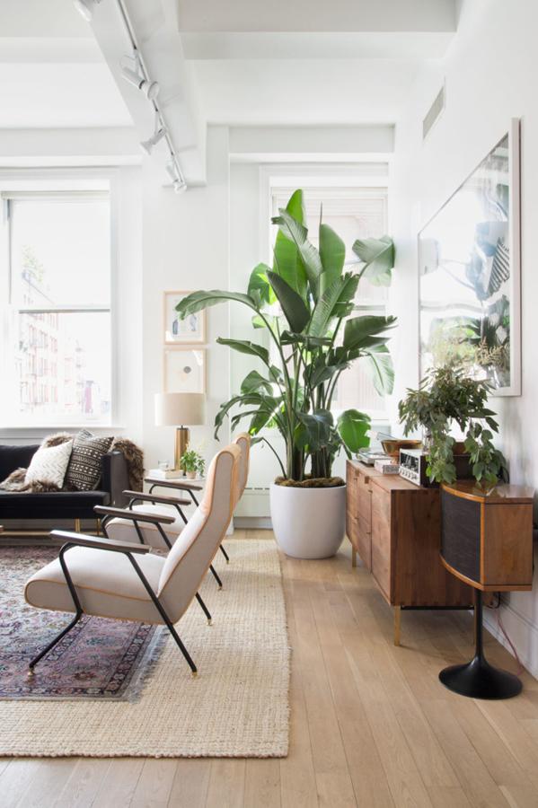 plantas salón