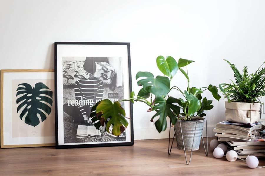 Plantas y cuadros