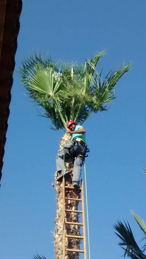 poda de arboles y Plantas Murcia