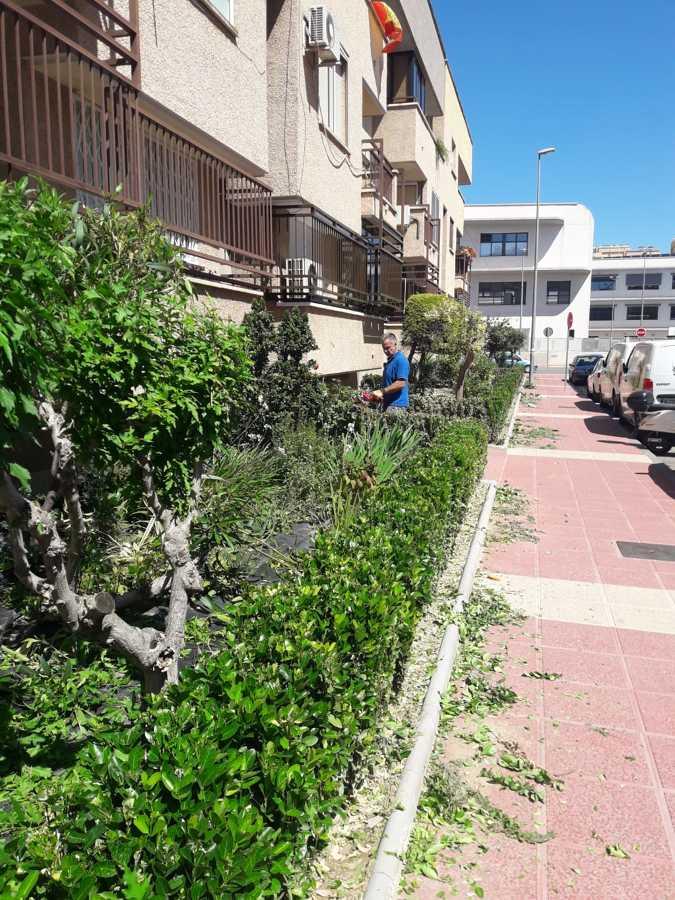 Poda de setos en Murcia