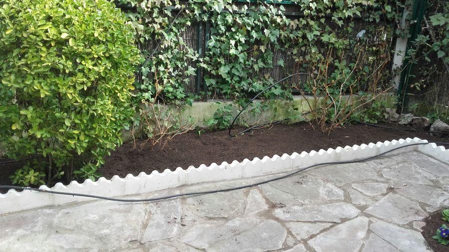 Poda y limpieza de plantas
