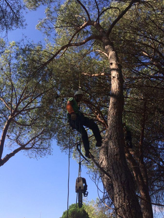 Foto podador de dumitru 1478399 habitissimo Trabajo jardinero girona