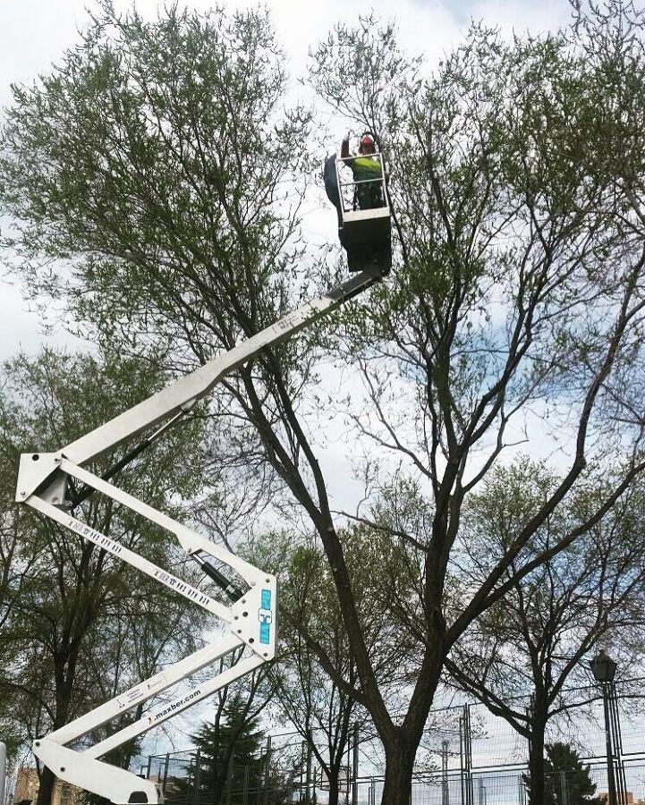 Foto podador de dumitru 1478401 habitissimo Trabajo jardinero girona