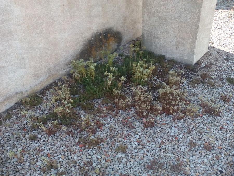 Presencia de vegetación en la cubierta plana