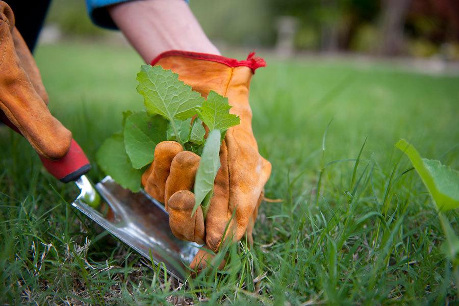 Quitar malas hierbas