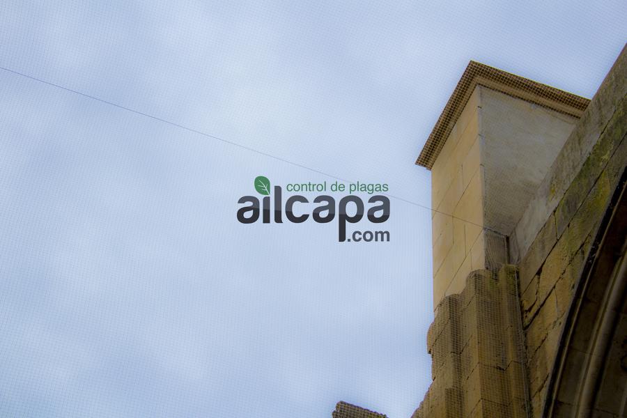 Redes antipalomas Basilica de Alba de Tormes