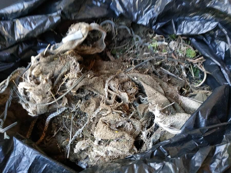 restos del nido retirado