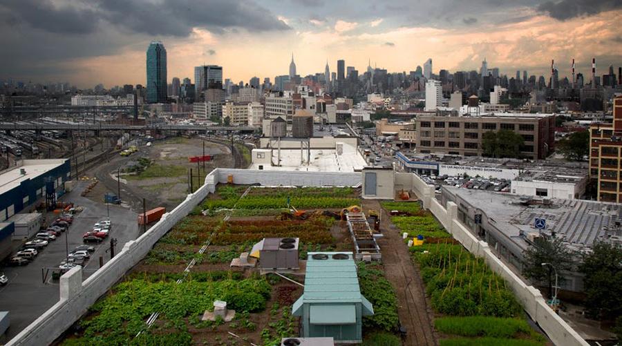 rooftop-farm