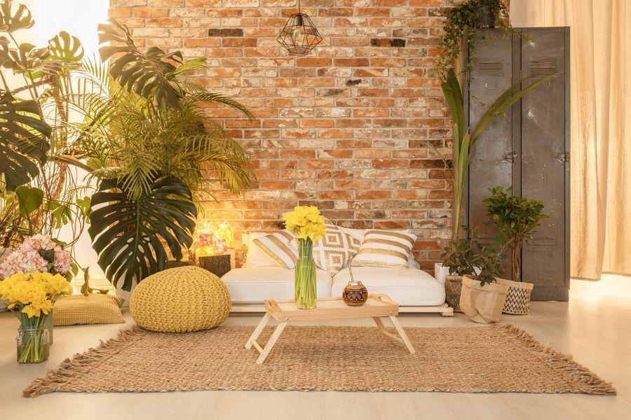 Salón con plantas de diferentes estilos
