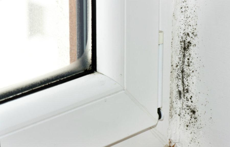 ventana con moho