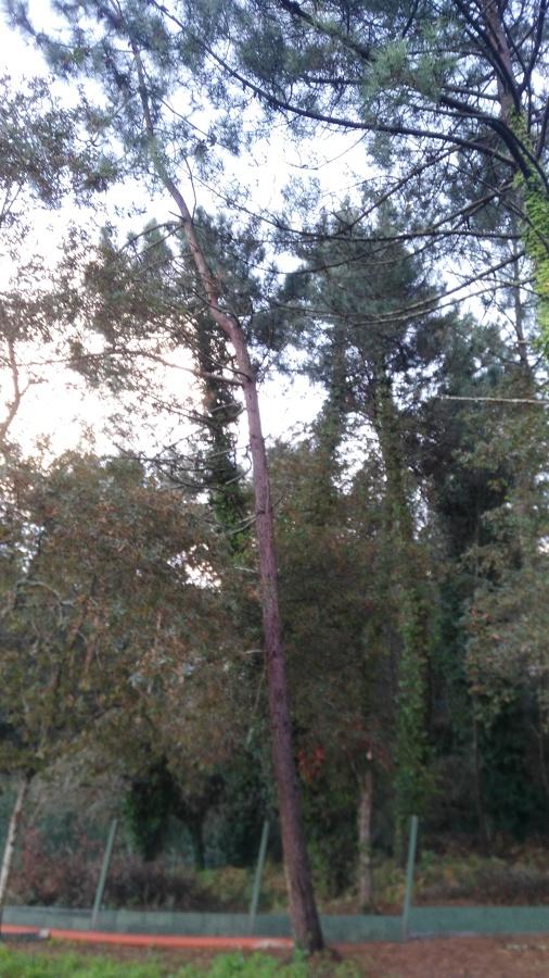 Situacion delsegundo pino