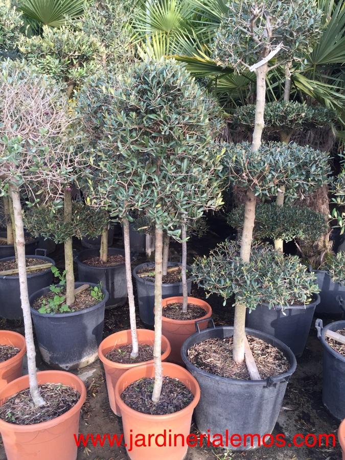Suministro plantas y árboles