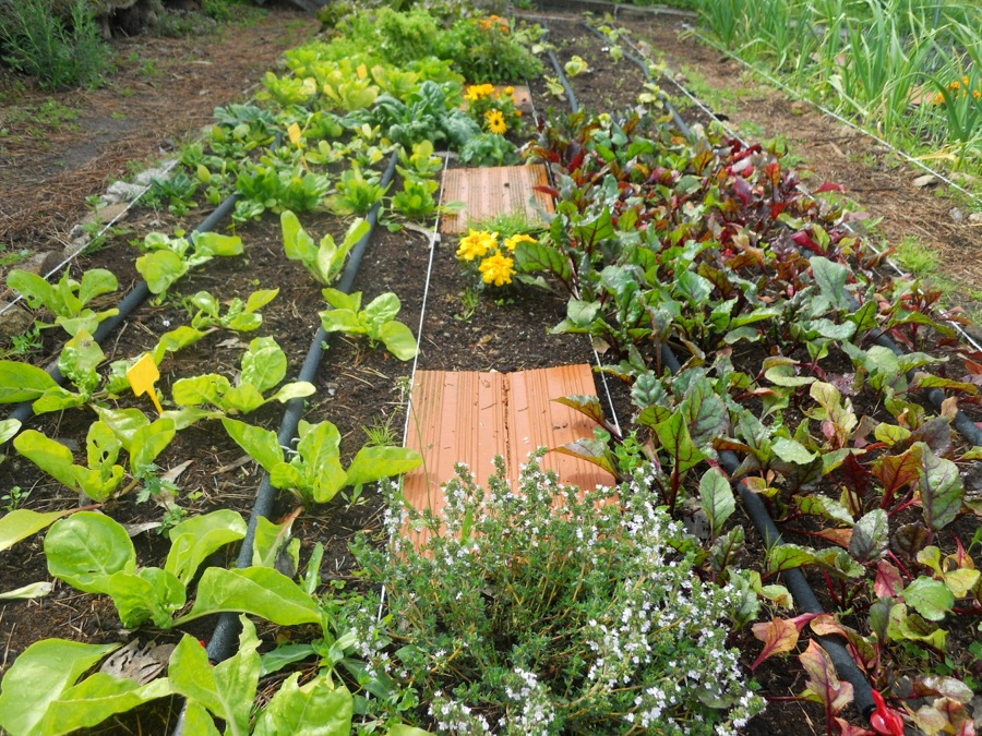 Gu a sencilla para crear un para so en tu jard n ideas - Como hacer un jardin bonito ...