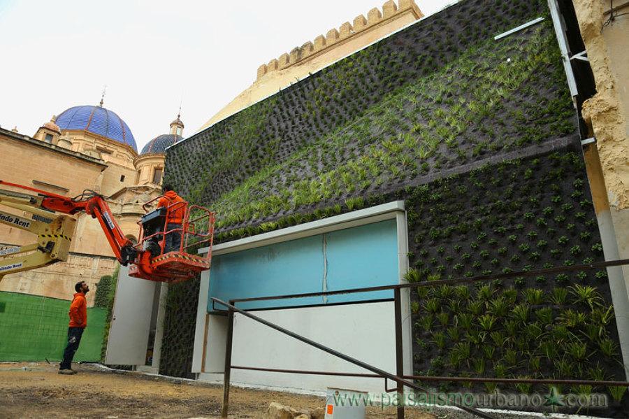 Terminando la colocación de las plantas