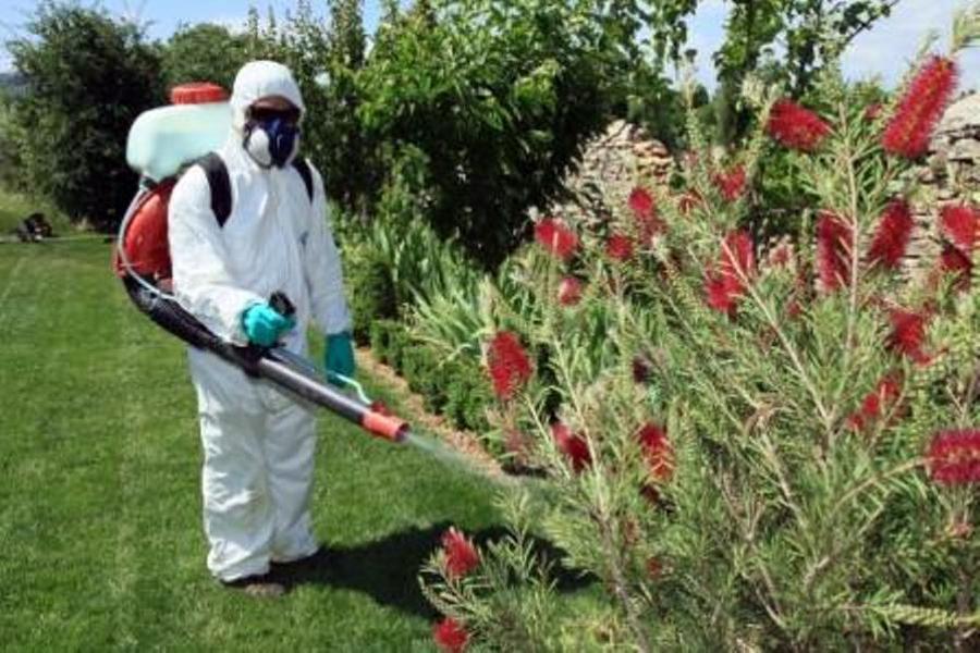 Foto tratamientos fitosanitarios de serman interservicios Trabajo jardinero girona