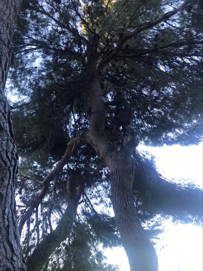 Trepa a pino