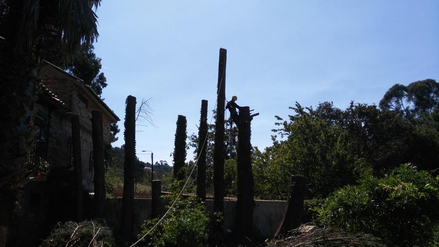 Troceado de los  troncos en trozos y descenso