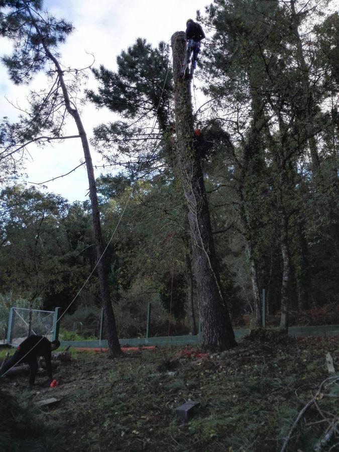 Troceado del tronco