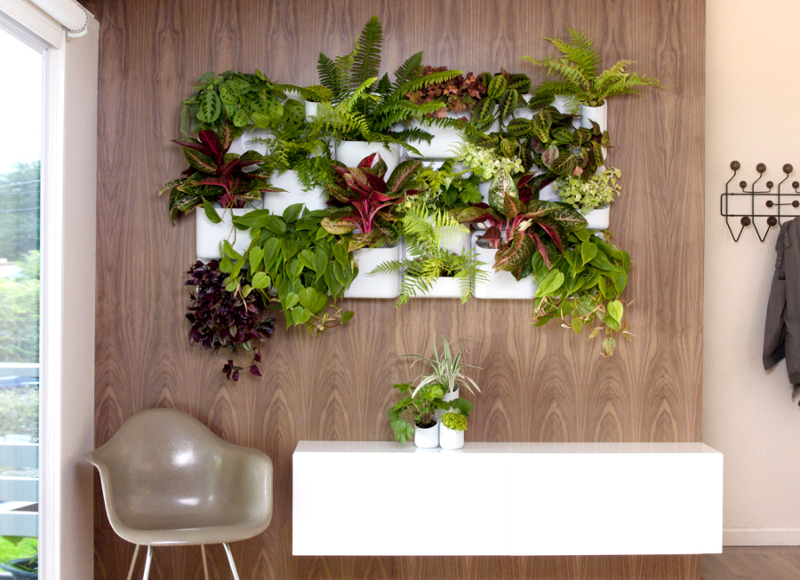 jardín comestible en casa