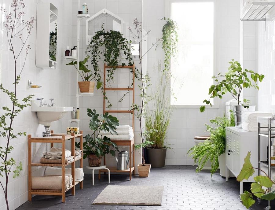 C mo cuidar tus plantas de interior ideas jardineros - Enredaderas de interior ...