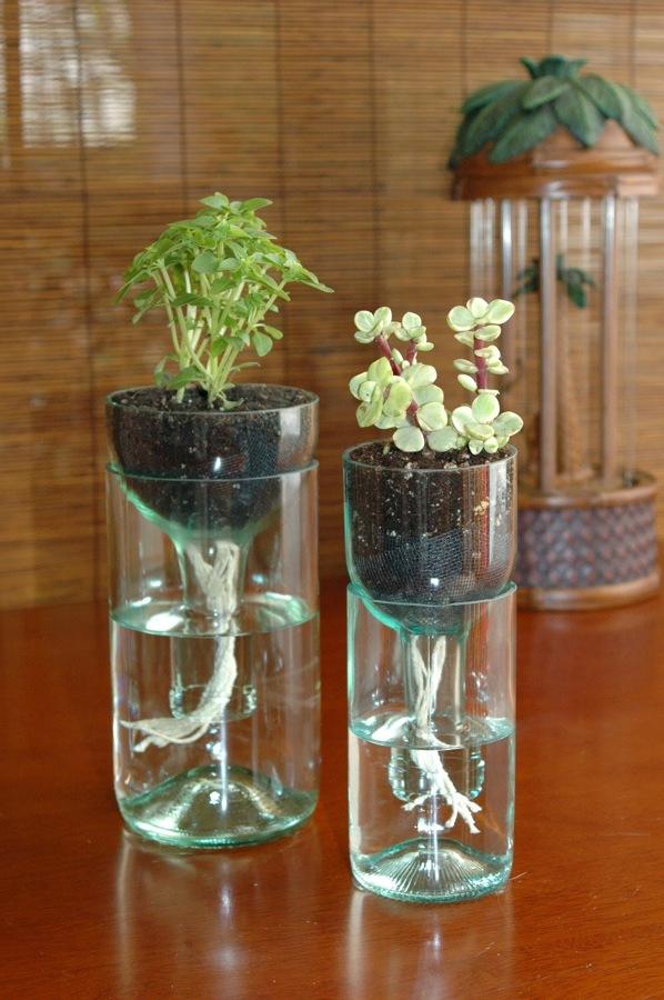 Cómo Cuidar Tus Plantas de Interior | Ideas Jardineros