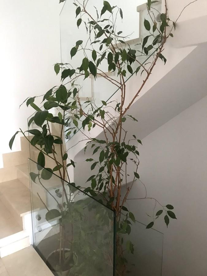 Vegetación a modo de patio en escalera