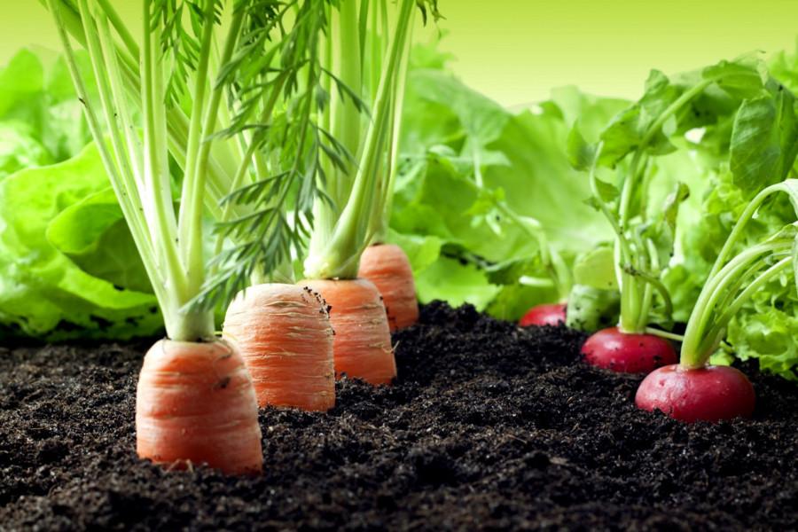 zanahorias-y-rabanos-1024x683