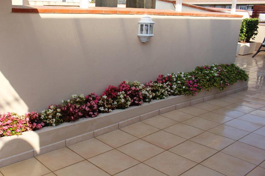 Zona de paso llena de flores